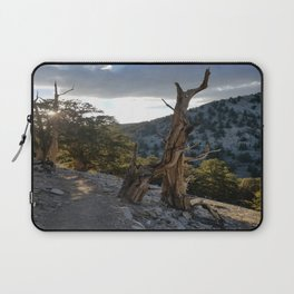 Ancient Bristlecone Pine Forest #2 Laptop Sleeve