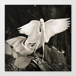 White bird dance 1 Canvas Print