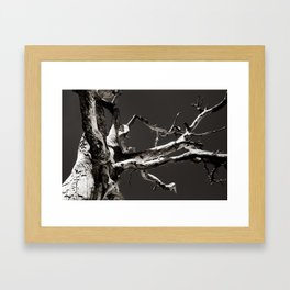 Joshua Tree 02 Framed Art Print