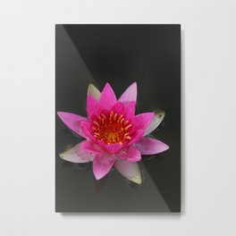 Floating Pink Lily Metal Print
