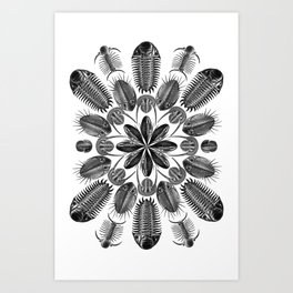 Trilobite and Fossil Mandala, Collage using Ernst Haeckel illustrations Art Print
