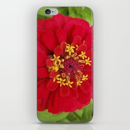 Red, RED Zinnia iPhone Skin