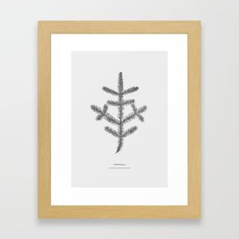 Spruce twig Framed Art Print