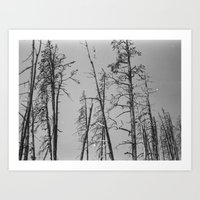 montana Art Prints featuring Montana by Caitlin Elizabeth Brookins