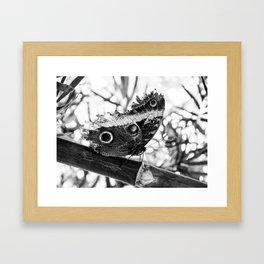 An Eye in the Woods Framed Art Print