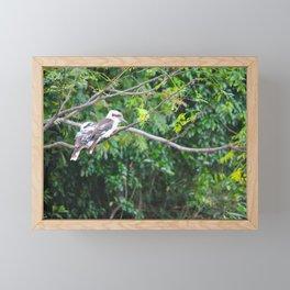 Kookaburras Framed Mini Art Print