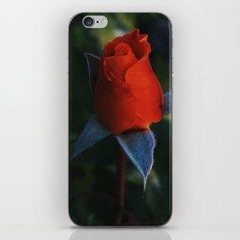 Buddy Rose iPhone Skin