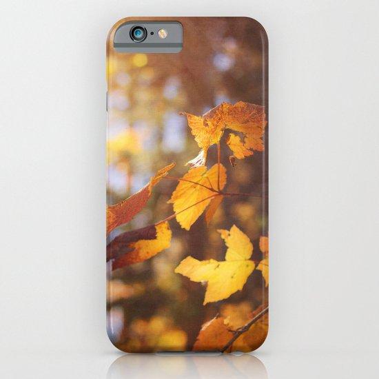 sun soaked autumn iPhone & iPod Case