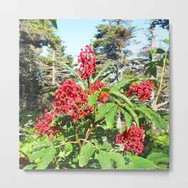 Watercolor Forb, Staghorn Sumac 01, Cape Breton, Canada Metal Print