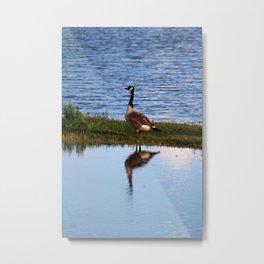 Goose Reflection Metal Print