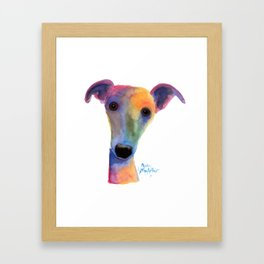 Nosey Dog Whippet Greyhound ' PANSY ' by Shirley MacArthur Framed Art Print