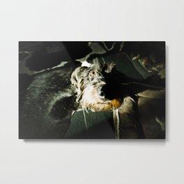 DOG DACKEL#42 Metal Print