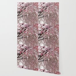 Elegant pink white nature snow cherry blossom floral Wallpaper