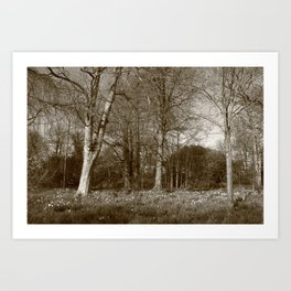 Early Spring in the Park II - Sepia Art Print
