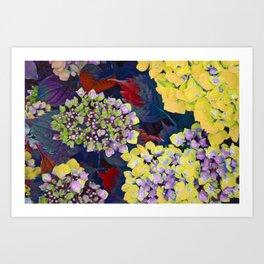 Hydrangea Yellow Art Print