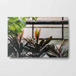 Hothouse Metal Print