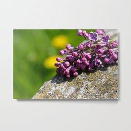 Lilac close up Metal Print
