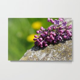 Lilac close up Metal Print