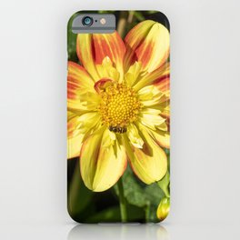 Dahlia Flower and Hoverfly iPhone Case