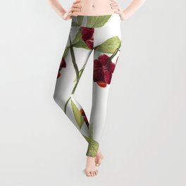 Strawberry Bush Hearts Bustin with Love (Euonymus Americanus) (1930) by Mary Vaux Walcott Leggings