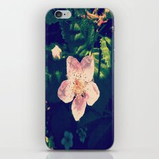 Blackberry Flower iPhone & iPod Skin