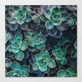 Succulent Blue Green Plants Canvas Print