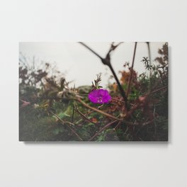 Lonely flower of Naszály mountain Metal Print