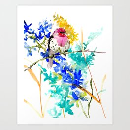 House Finch and Wildflowers Art Print