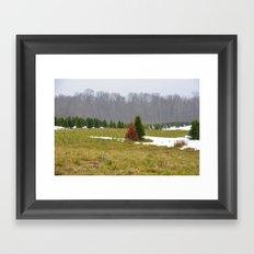 Pine Tree Framed Art Print