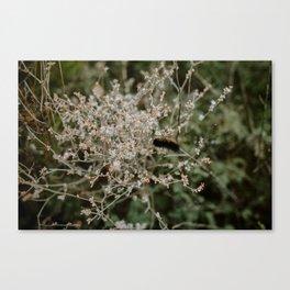 Wooly Bear Caterpillar on Plants - Big Bend Canvas Print