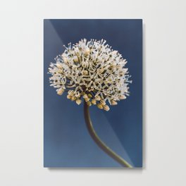 Allium - Night Blue Metal Print