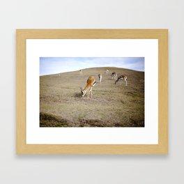Gizelles  Framed Art Print