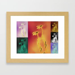 Daisies in many colors Framed Art Print