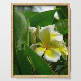 Plumeria Serving Tray