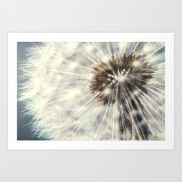Dandelion clock Art Print