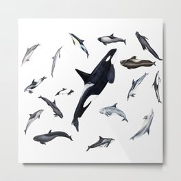 Dolphins all around Metal Print