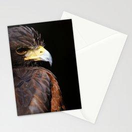 Harris Hawk   Wildife Photography   Bird of Prey   Bird   Raptor   Portrait   Hawk Stationery Cards