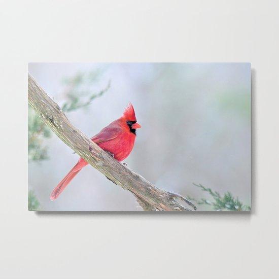 Grumpy Cardinal Metal Print