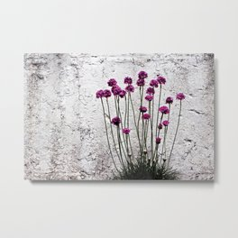 Urban garden. Purple flowers. Metal Print