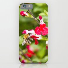 Busy bee in the flowers iPhone 6s Slim Case