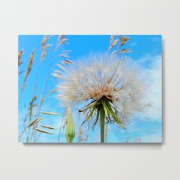 Seeds Ready to Fly Metal Print