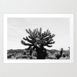 Cholla Cactus Garden XI Art Print