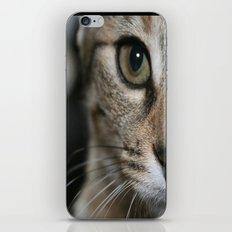 Eye of a Tiger... iPhone & iPod Skin