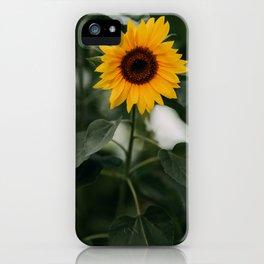 Sunflower, beautiful yellow flower | Dark moody vibe | photography | photo art print iPhone Case