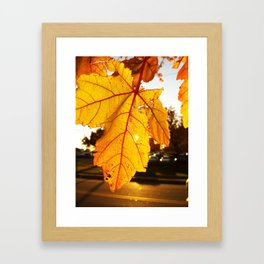 Fall Leaf Framed Art Print