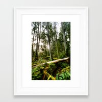 forrest Framed Art Prints featuring Forrest by ILIA PHOTO + CINEMA