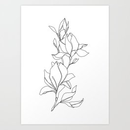 Botanical illustration line drawing - Magnolia Art Print