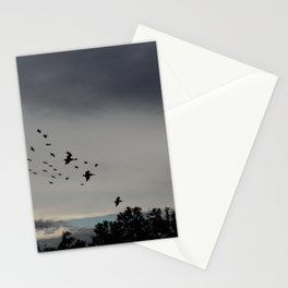 Pelicans Coming In For Night Stationery Cards
