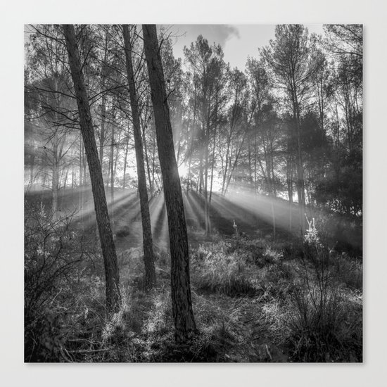 """Sunrise through the foggy forest"". Forest dreams. Mono Canvas Print"