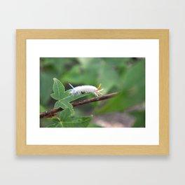 Fuzzy Caterpillar Framed Art Print